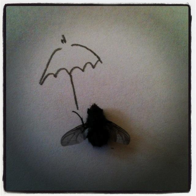 Die Regenfliege